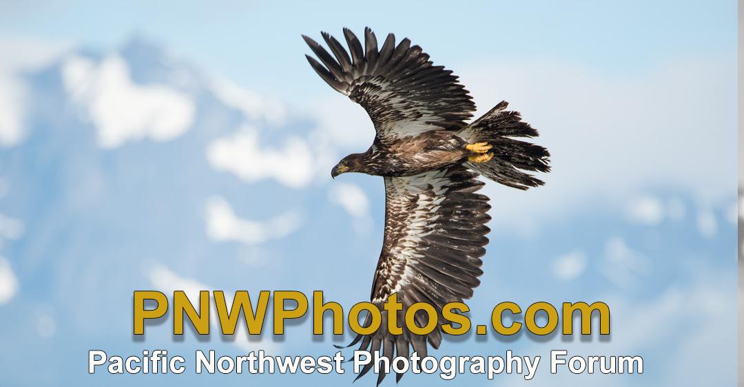 www.pnwphotos.com