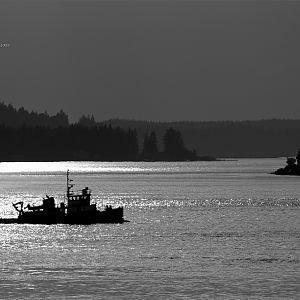 Tug Sunset in Black and White