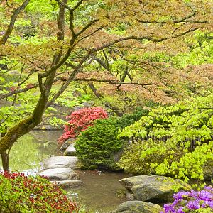 Spring at the Japanese Garden