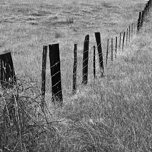Fence_Line