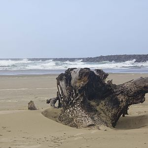 beach in Florence, OR Coast