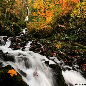 Fall at Wahkeena Creek Falls