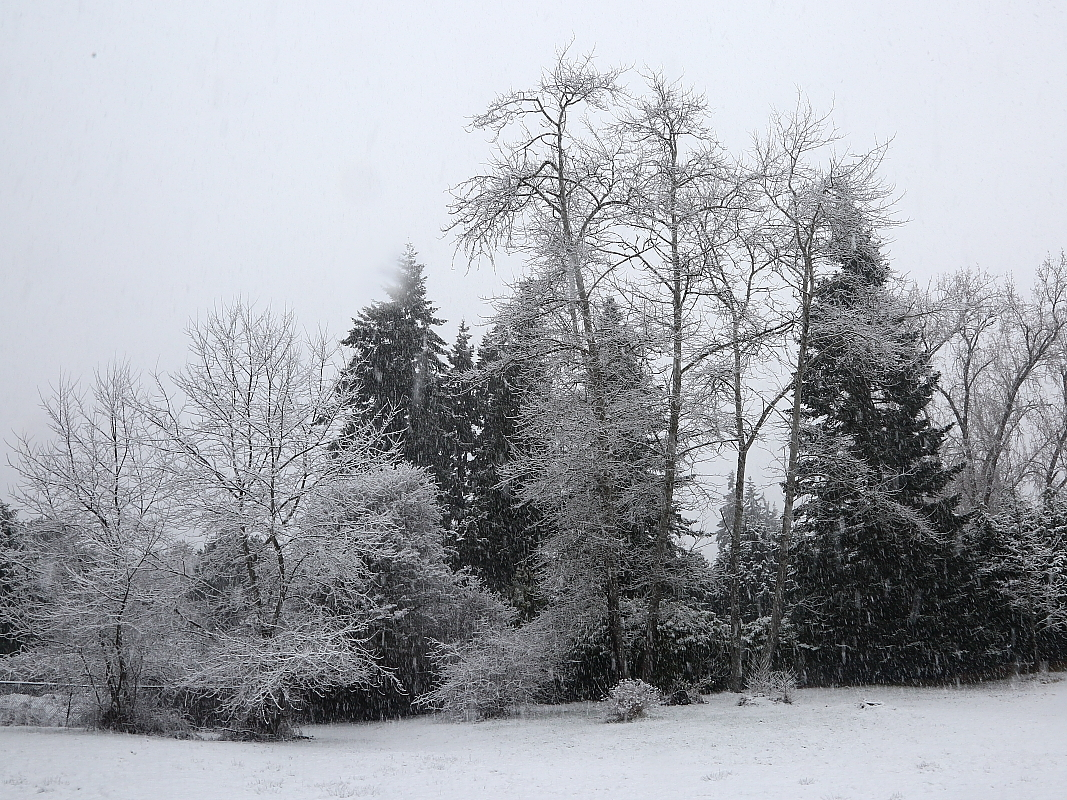 2-03-2019 winter wonderland back fortyIMG_8059.JPG