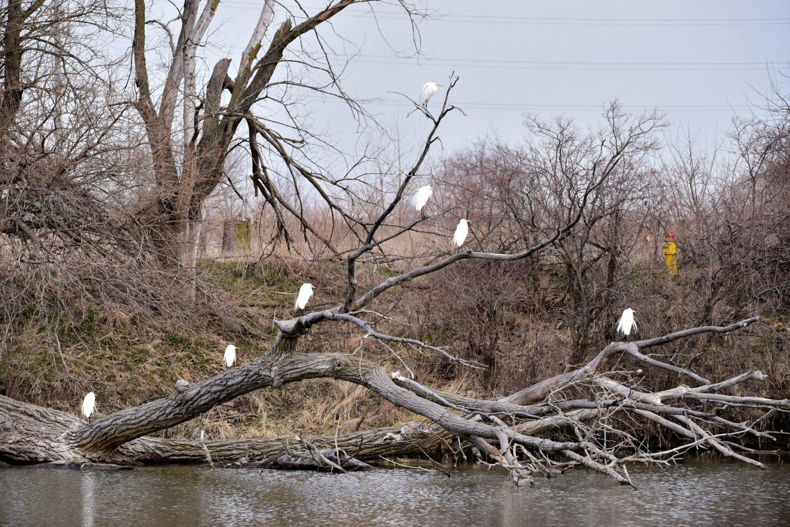 Egret Tree_042018_2048.jpg