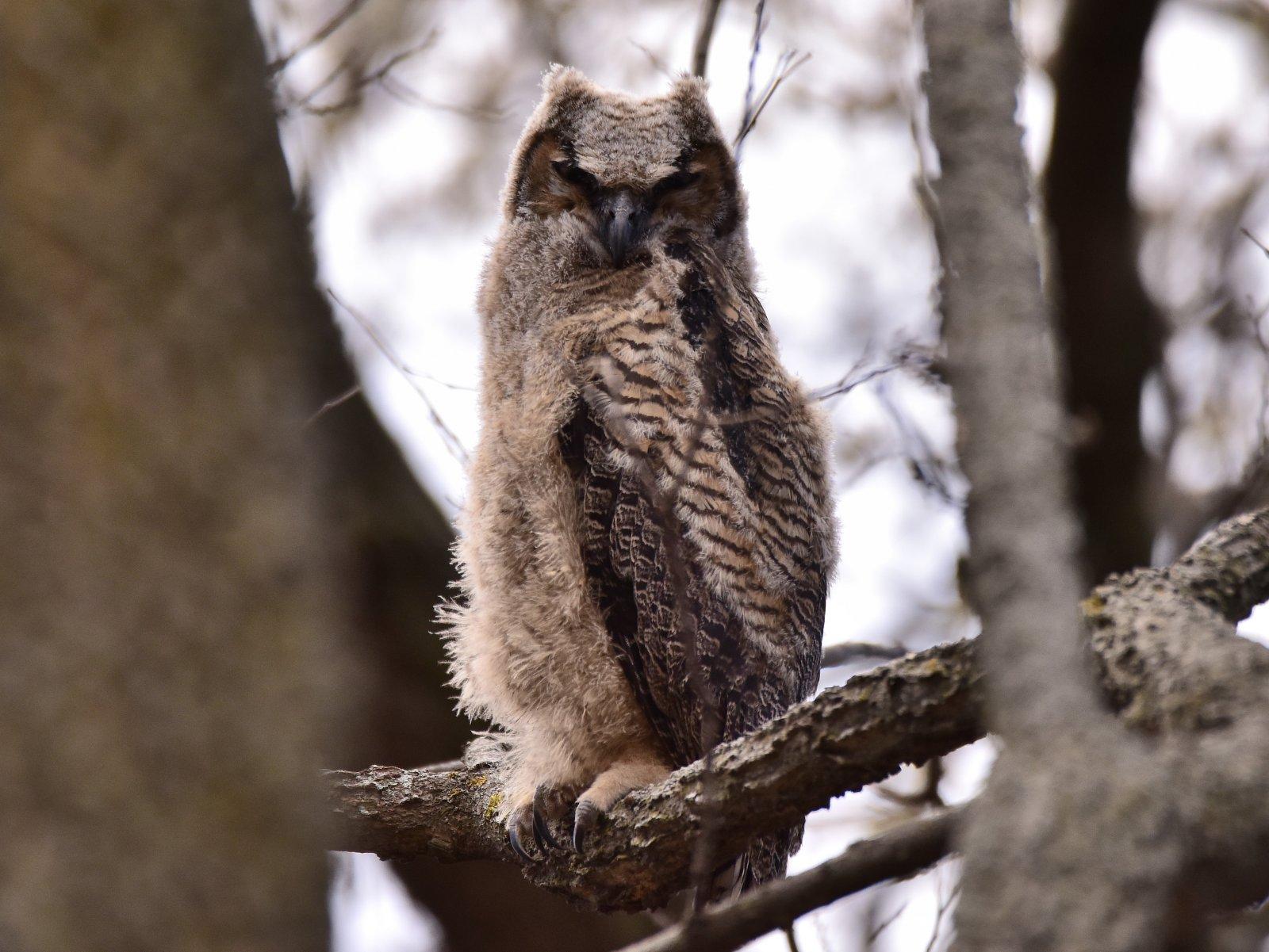 Owl 1_042618.JPG